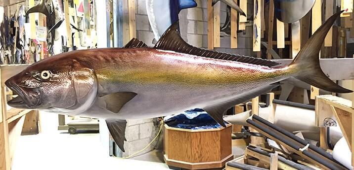 fish mounting img