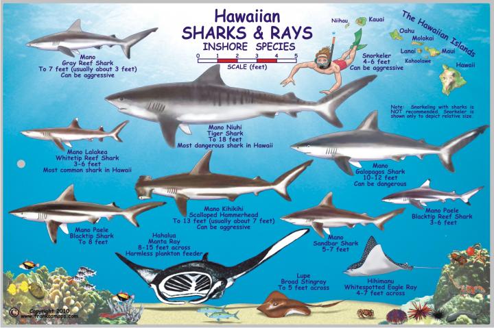 how to say bull shark in japanese