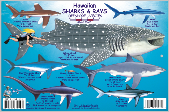 Hawaii Sharks Offshore Most Dangerous Places For